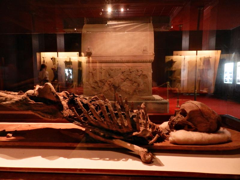 esqueleto no Istanbul Arkeoloji Müzeleri - Anasayfa