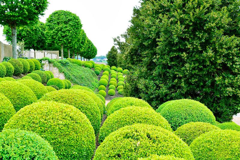 jardim do Château d'Amboise Viagem para PAYS DE LA LOIRE e CENTRE NA FRANÇA