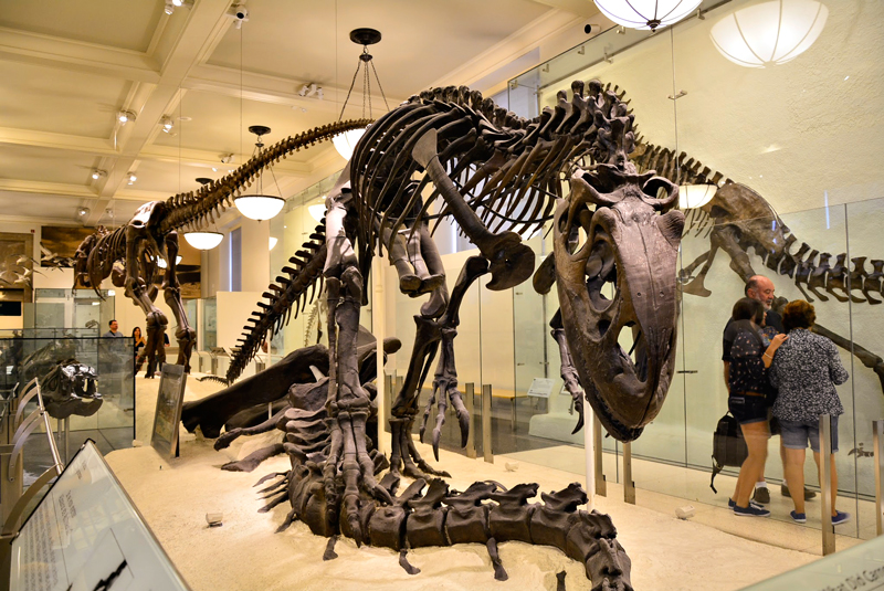 American Museum of Natural History em New York