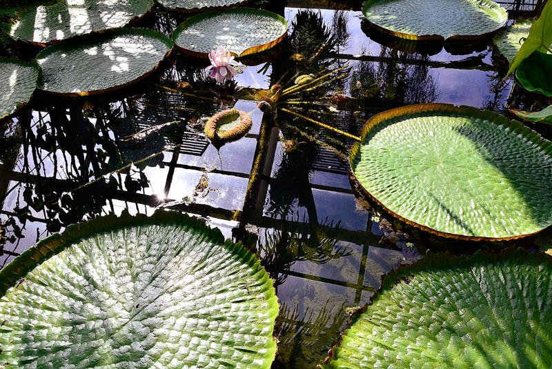 Brooklyn Botanical Garden em New York