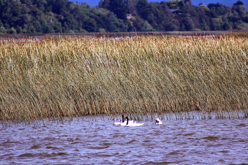 santuario de la naturaleza carlos anwandter na region de los lagos no chile
