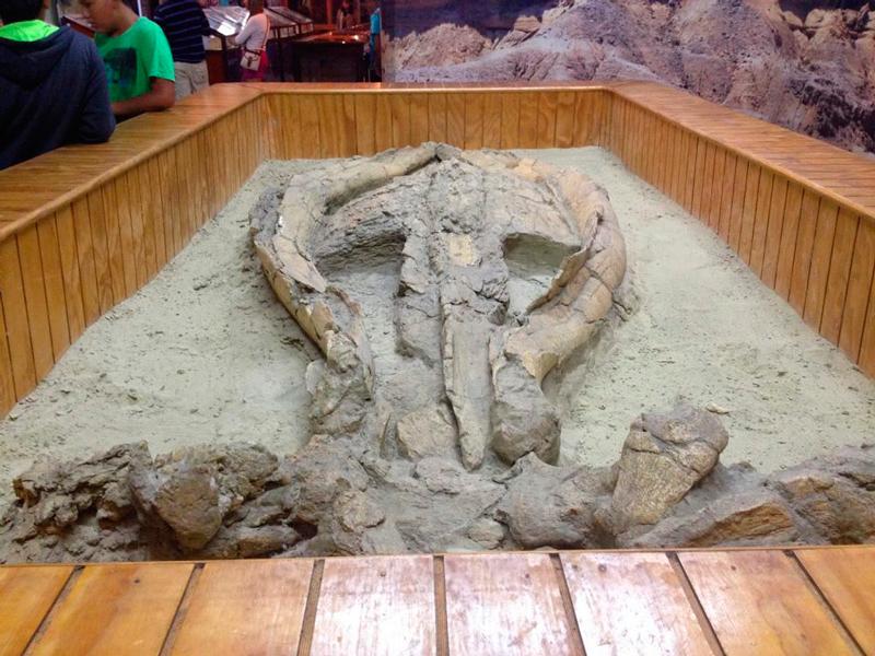 Museo Paleontologico de Caldera no Chile