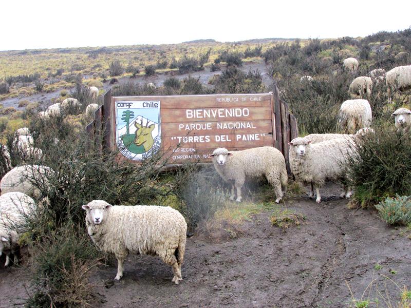 Dicas de Viagem a PUNTA ARENAS e PUERTO NATALES, Torres del Paine