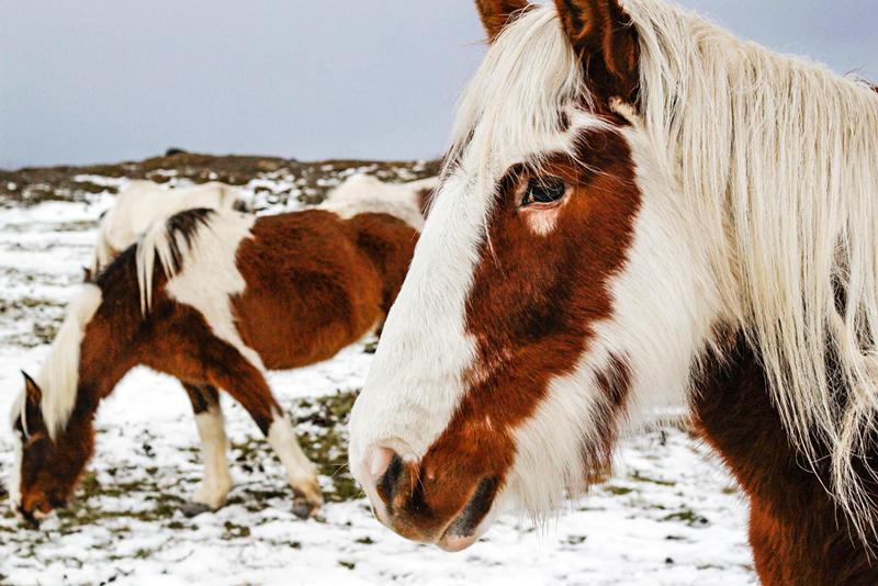 cavalos em Ushuaia na Argentina