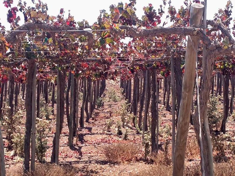 Rota do vinho de Limari e a Viña Tabali no Chile