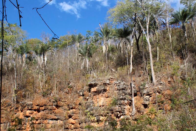 Vegetação vista na trilha até o Poço Encantado na Bahia