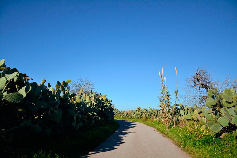 Cactos na Isola di Sant'Antiocco na Italia
