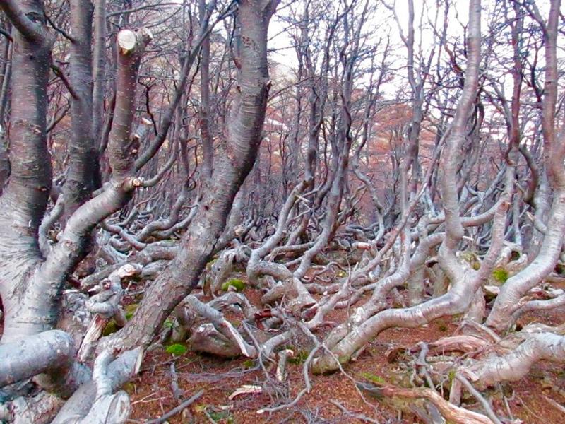 Bosque na trilha Glaciar Martial em Ushuaia na Argentina