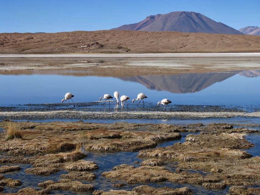 Deserto de Sioli, Bolívia