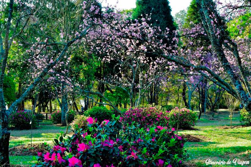 jardim das cerejeiras no Parque do Carmo em São Paulo