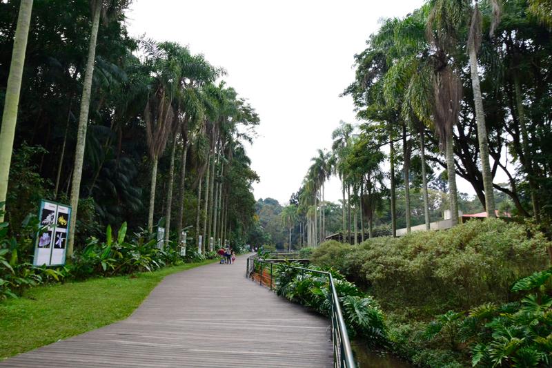Alameda Fernando Costa do jardim botânico de são paulo