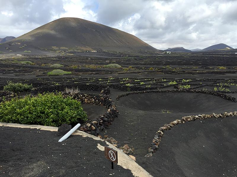Vinhedo em terras vulcanicas, Lanzarote, Ilhas Canarias, espanha