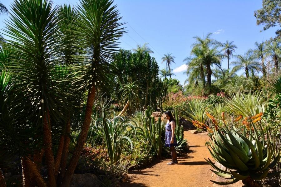 Inhotim, Minas Gerais, Brasil, Arte Contemporânea, Parque, Jardim Desértico