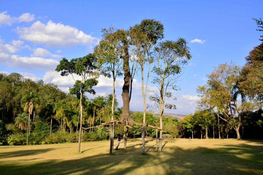 Inhotim, Minas Gerais, Brasil, Arte Contemporânea, Parque, Giuseppe Penone