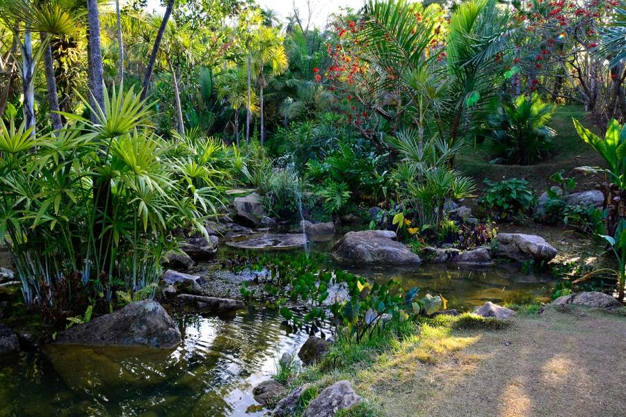 Inhotim, Minas Gerais, Brasil, Arte Contemporânea, Parque, Jardim Veredas