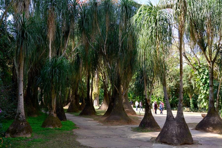 Inhotim, Minas Gerais, Brasil, Arte Contemporânea, Parque