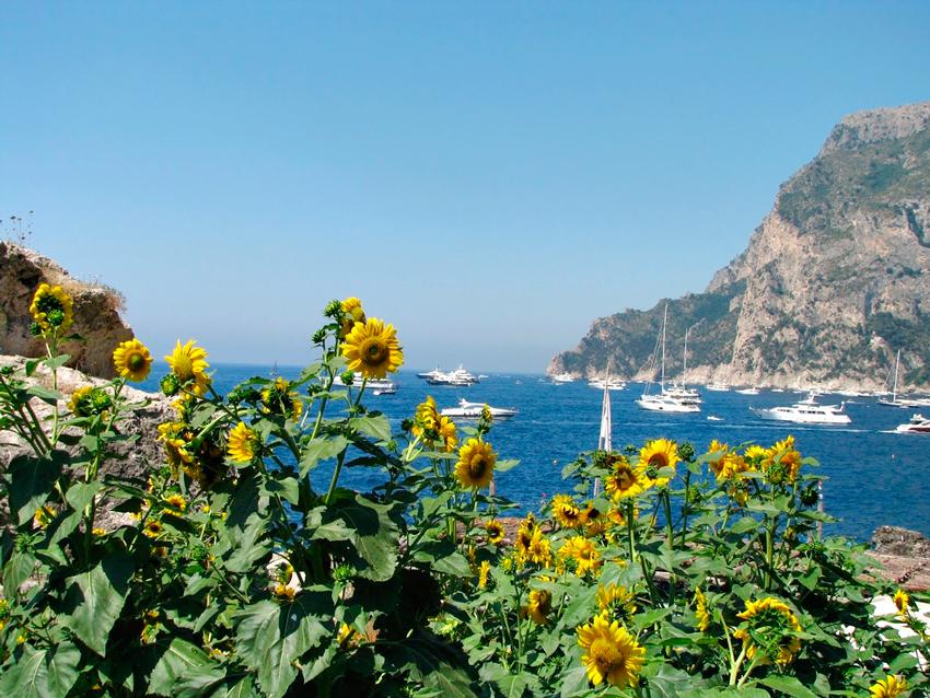 girassóis perto do arco natural da Ilha de Capri na Italia