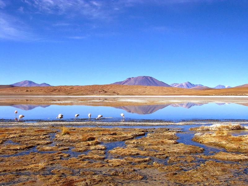 Laguna Colorada, Deserto de Siloli, Bolivia