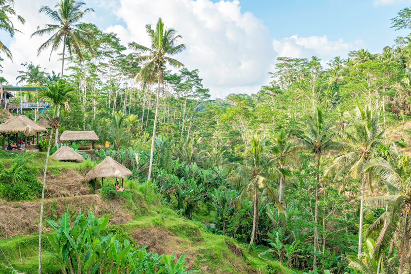 Diário de Bordo: Os arrozais de Bali, Indonésia