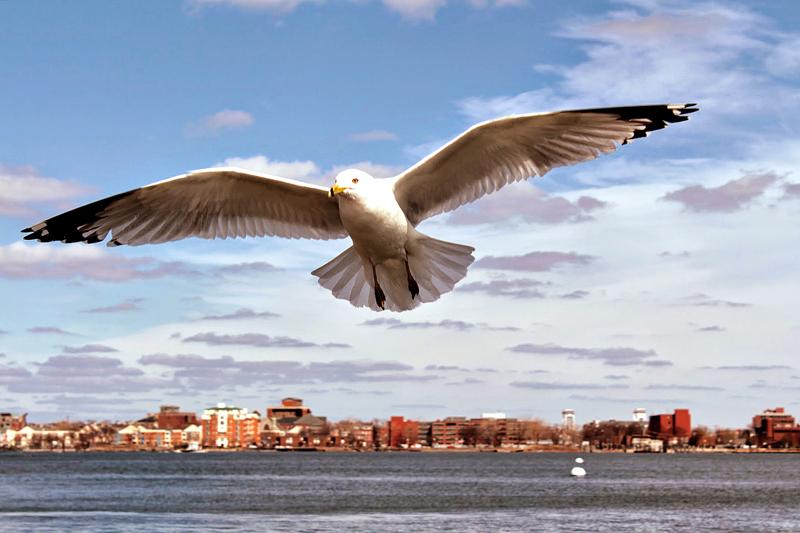 Charles river, Boston, Massachusetts, Estados Unidos, turismo, América do Norte, dicas de viagem
