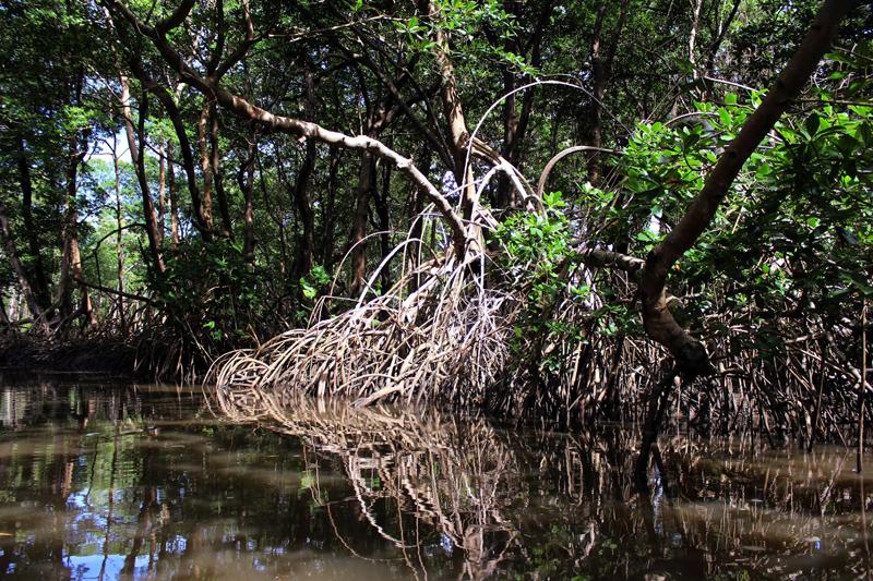Passeio pelo manguezal em Lençóis Maranhenses