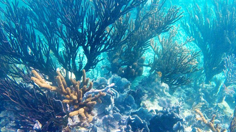 Corais em Quintana Roo no México