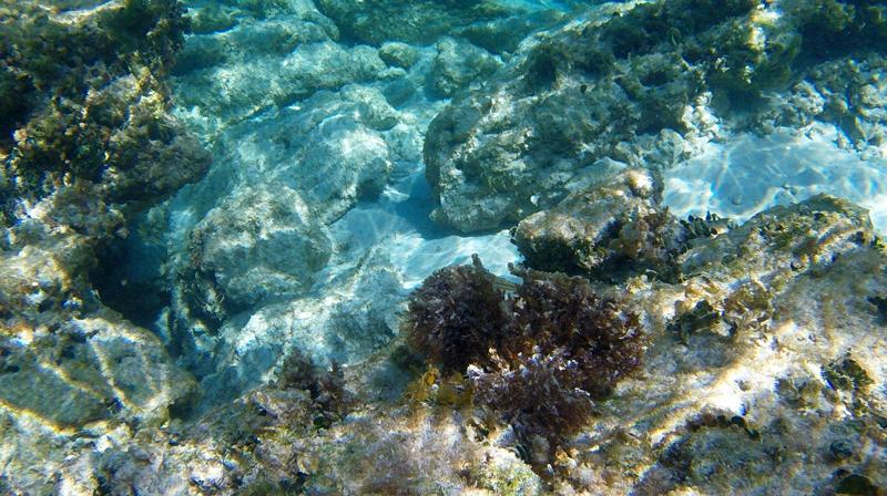 Mergulho em Isla Mujeres no Mexico