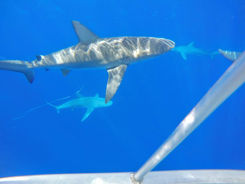 North Shore Shark Adventures em O'ahu  no Hawaii