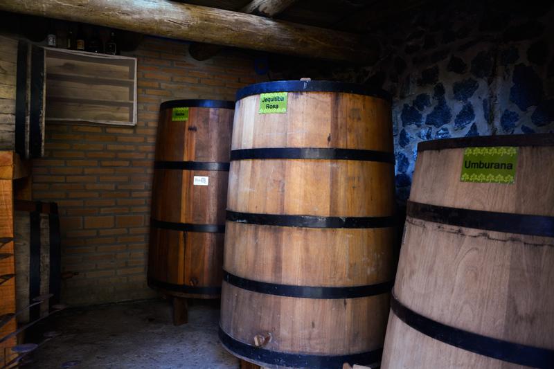 Tonéis de azeite do Olival em Cunha